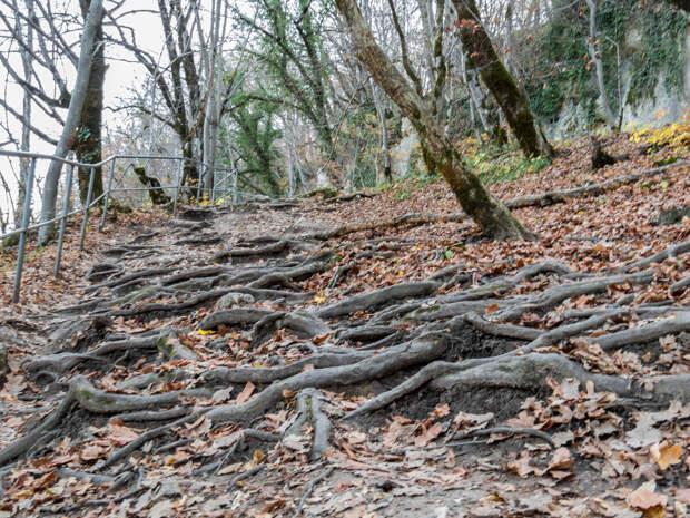 Ступени из корней деревьев.