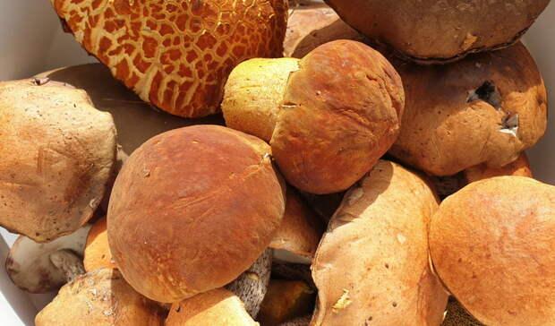 Стандарты на«шляпки грибов»: Минприроды разъяснило правила сбора дикоросов