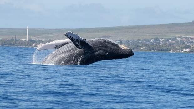 Историю проглоченного китом американца поставили под сомнение