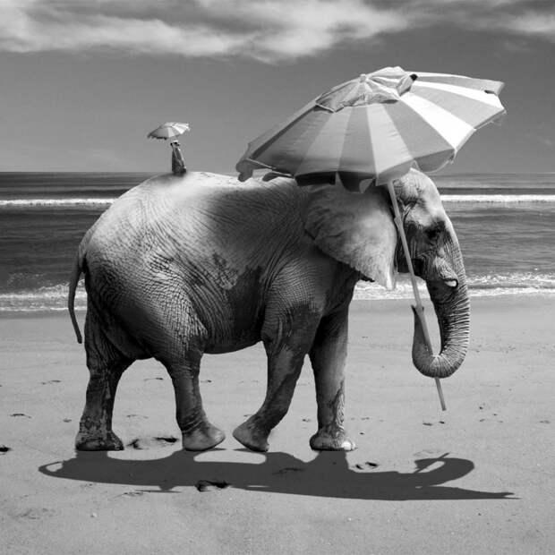 Сюрреалистичные фотоколлажи Марка Уорда