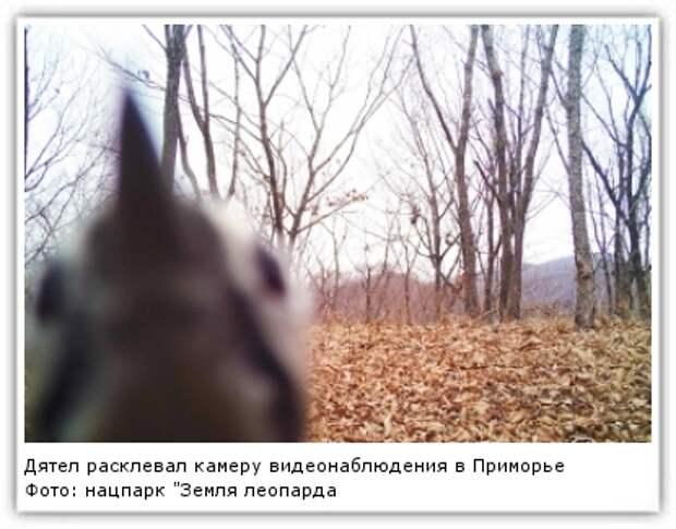 """Фото: нацпарк """"Земля леопарда"""""""
