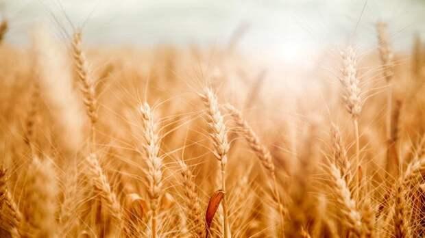 Украина запретила ввоз из России 25 товаров и продуктов