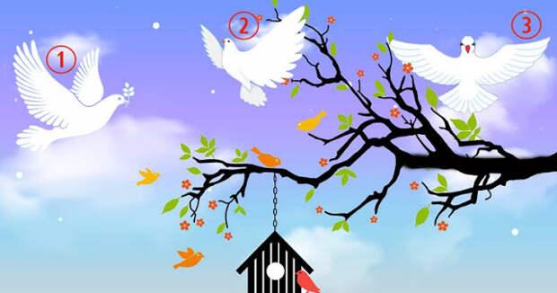 Тест: выбери своего голубя мира и получи прекрасное послание света