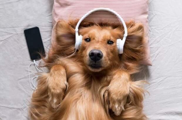 Какую музыку любят разные животные