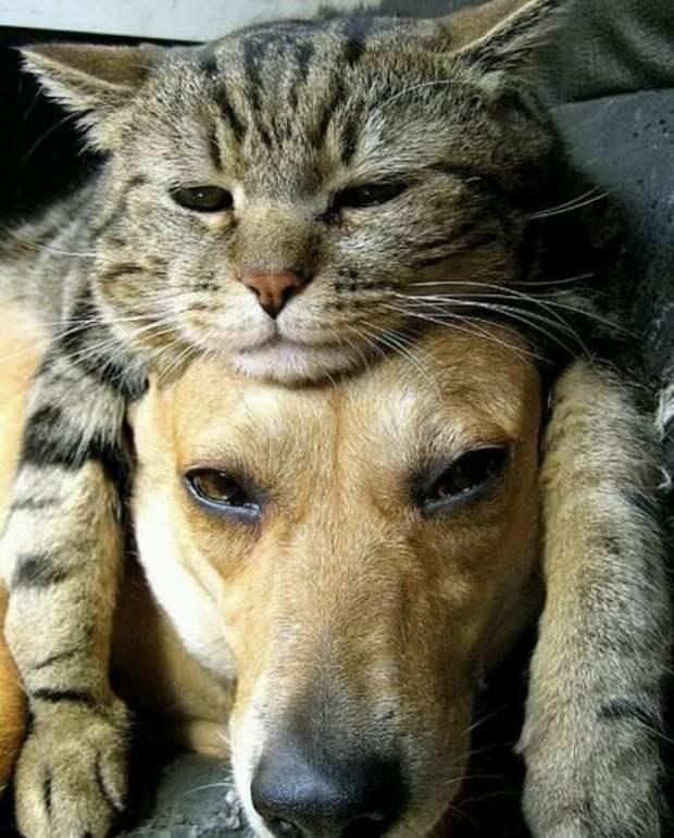 16. Собака тоже не осталась в стороне Популярность, животные, идея, интернет, кот, фото, шапка