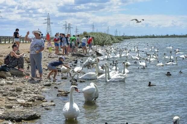 Благодаря туристическому кешбеку крымские отели смогут принимать отдыхающих весь год, — Черняк