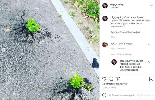Фото дня: целеустремленные ростки в Ховрине пробились сквозь асфальт