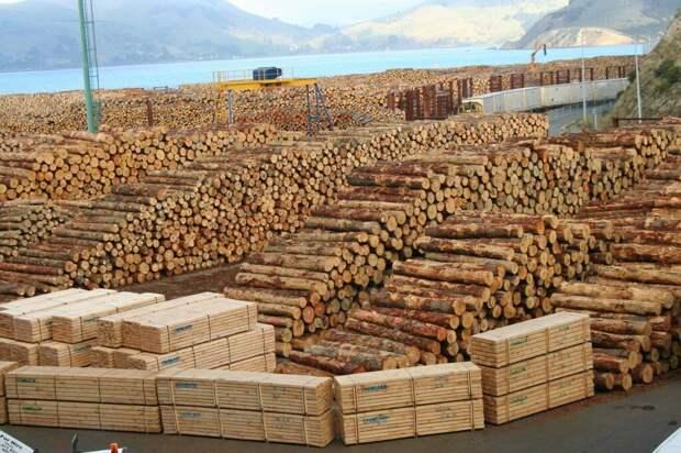 В комментариях рассказали почему Путин решил запретить экспорт леса-кругляка. Я задумался...
