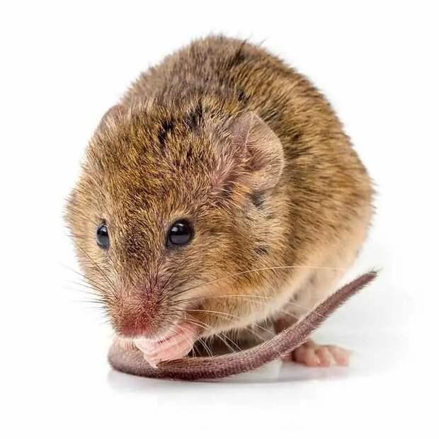 Самые умопомрачительные эксперименты с животными за последние 100 лет