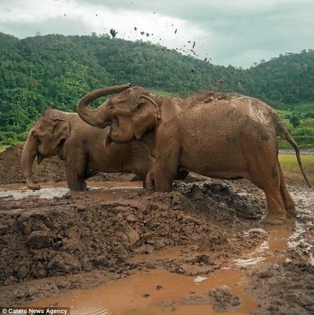 Слоны наконец на свободе! Их выкупили и выпустили после долгих лет рабства слоны, таиланд