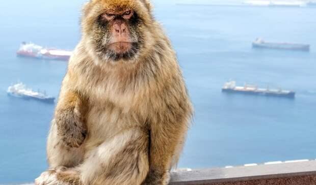 Из-за сбежавшей макаки выставку животных вТЦАсбеста проверит прокуратура