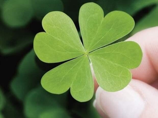 5 простых примет, сулящих скорую удачу