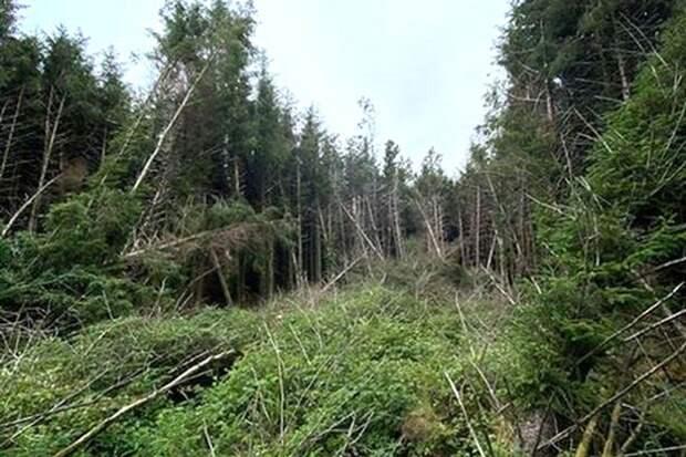 «Дыра посреди леса»: обнаружено место падения неизвестного объекта
