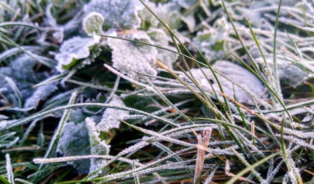 Омичей предупредили об опасности из-за сильных заморозков