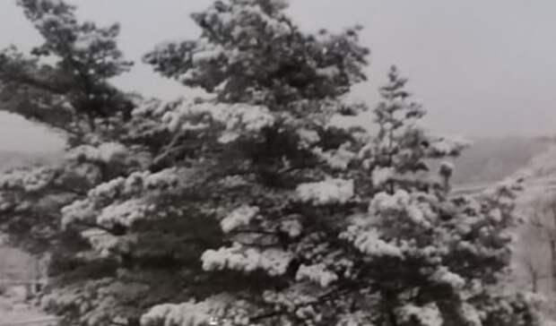 Картина дня вПриморье: первый снег, День Кореи иремонт наДальзаводской