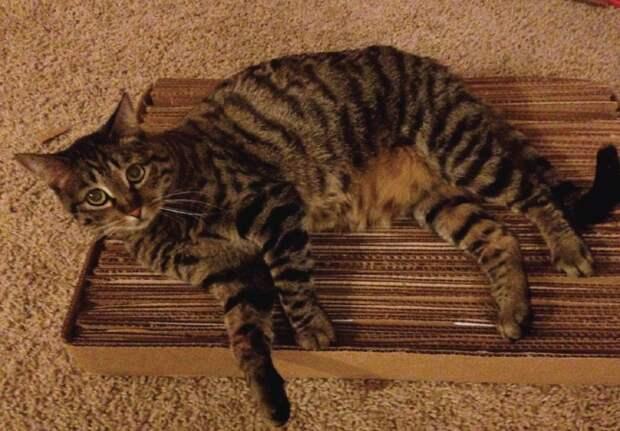 Чтобы сохранить мебель и хорошие отношения с котом когтеточка, конус, коробка, кот