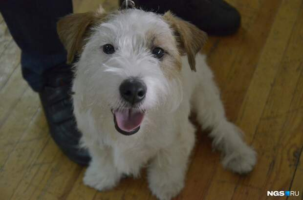 Новосибирских собак начали атаковать клещи — чем они могут заразиться