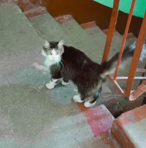 Вот такая ласковая, наверняка ещё недавно домашняя, кошечка нуждается в помощи!..
