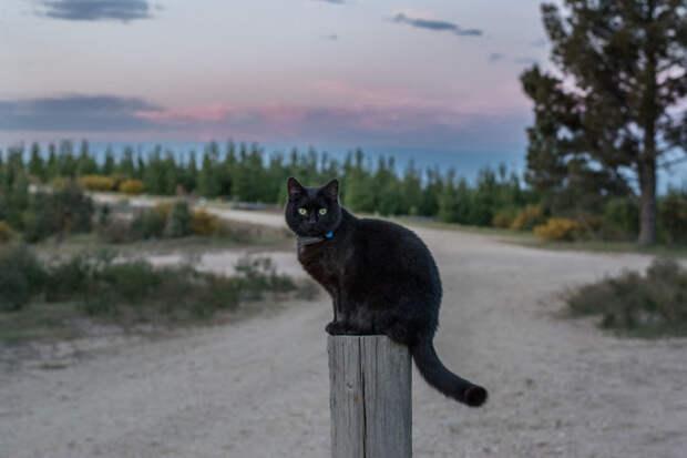 На шее у Уиллоу есть специальный ошейник, по которому хозяин может отслеживать ее местонахождение. Но она, кажется, и не думала сбежать! австралия, коты, мило, природа, путешествия, туризм, фото, фургон
