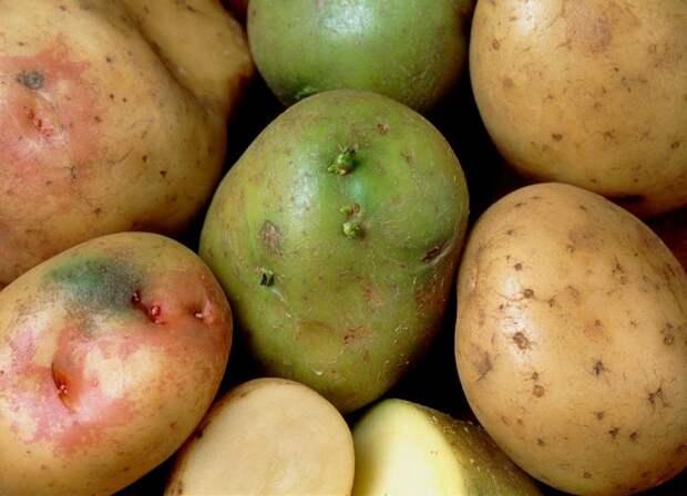 как выбрать вкусную картошку