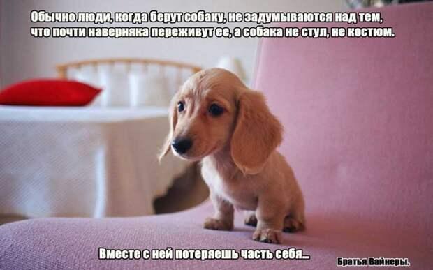 7.  афоризмы, животные, собаки