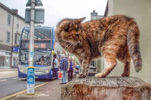 Еле нашли! Кошка-беглянка проехала натрех автобусах, чтобы добраться доморя