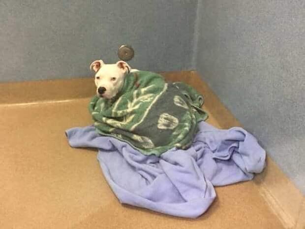 собака укутана в одеяла