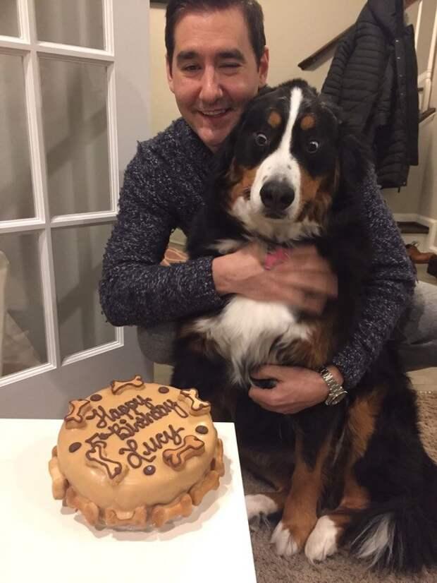 Именинный торт животные, жизнь, мир, роскошь, собака, удобство, фото