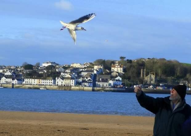 Вот уже 12 лет каждый день эта чайка прилетает к мужчине, который ее спас