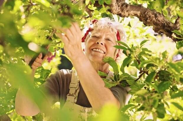 5 полезных работ для плодового сада в конце нынешнего лета