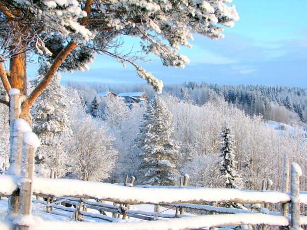 Зима ! 24.01.2010 12-18-57 24.01.2010 12-40-35.2010 12-40-35