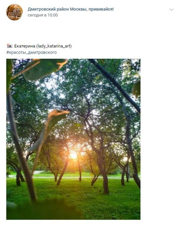 Фото дня: теплый закат среди яблонь «Ангарских прудов»
