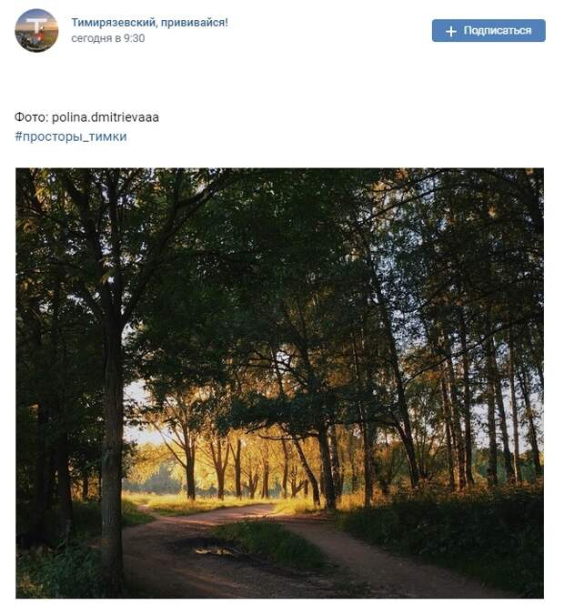 Фото дня: Тимирязевский лес на закате