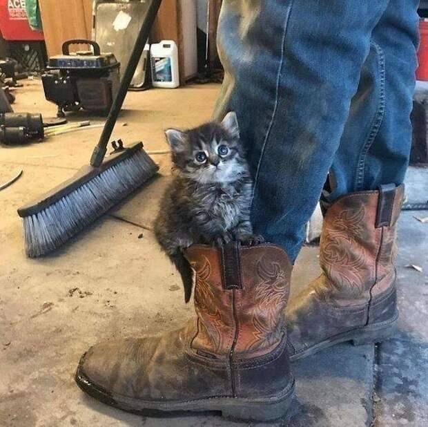 Мурчалки животные, жизнь, киски, коты