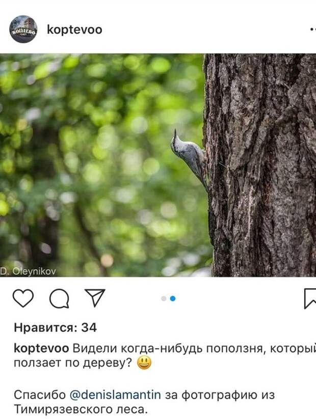 Фото дня: поползень в Тимирязевском лесу