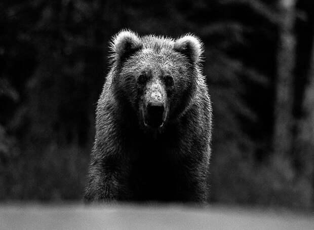 Фотограф говорит, что испытал истинный страх, когда столкнулся лицом к лицу со взрослым бурым медведем на Аляске