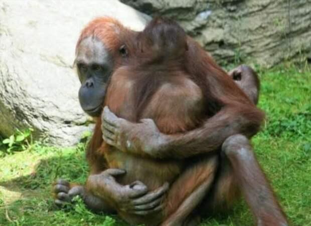 Как общаются самые умные обезьяны в мире?