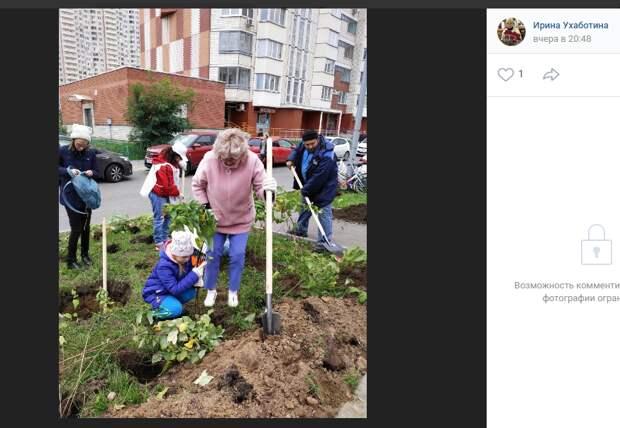 В Некрасовке посадили еще 1000 кустов и 40 деревьев