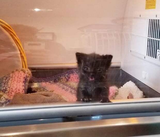 Ветеринары никак не могли понять, почему крошечный котенок ест, но не растет