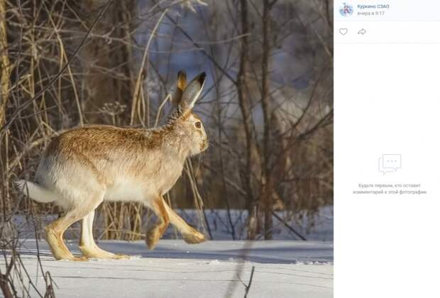 Фото дня: в Куркине вновь появились зайцы