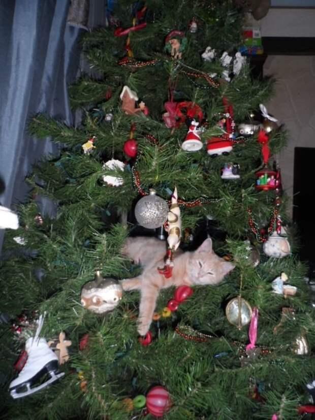 """18. """"Всем спокойной ночи!"""" животные, новый год, праздник к нам приходит, разрушительная сила, рождество, собаки и кошки, юмор"""