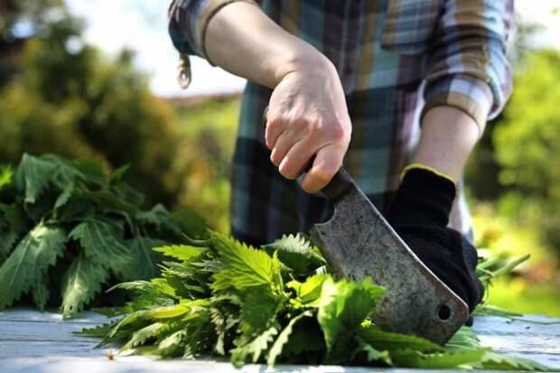 удобрение из крапивы