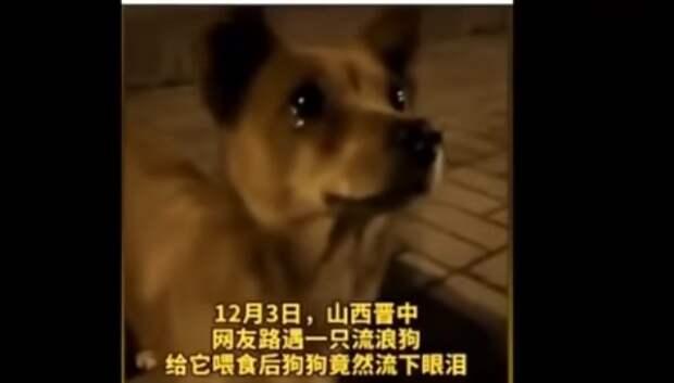 Девушка покормила бродячего пса колбасой и песик не сдержал слез