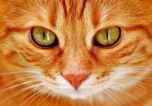 Как я стал хозяином роскошного кота. Замечательная добрая жизненная история