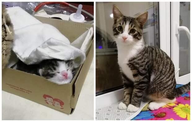 «Думала, что не донесу котенка до дома живым»