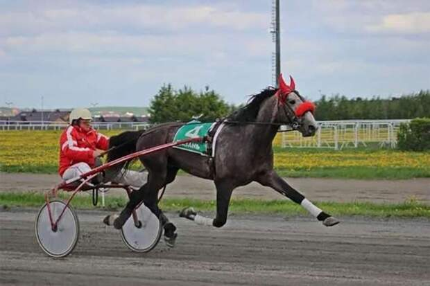 Орловский рысак: Лучшая в мире порода лошадей создана русскими из-за плохих дорог (7 фото)