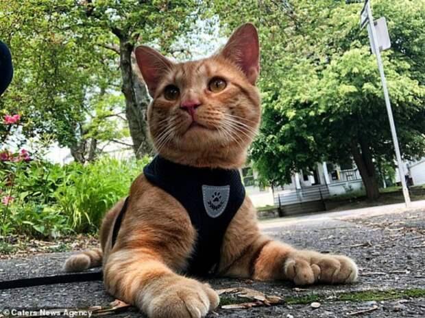 Хозяйка показала аномально большие лапы спасенного кота видео, история, кот, коты, кошки, особенные животные