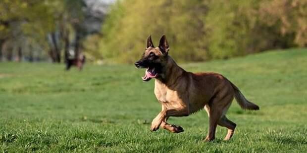 Прогулки и пробежки помогут сохранить здоровье собаки