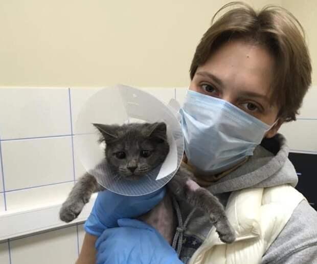 Спасенного из Москвы-реки котенка в Строгине нарекли Нептуном