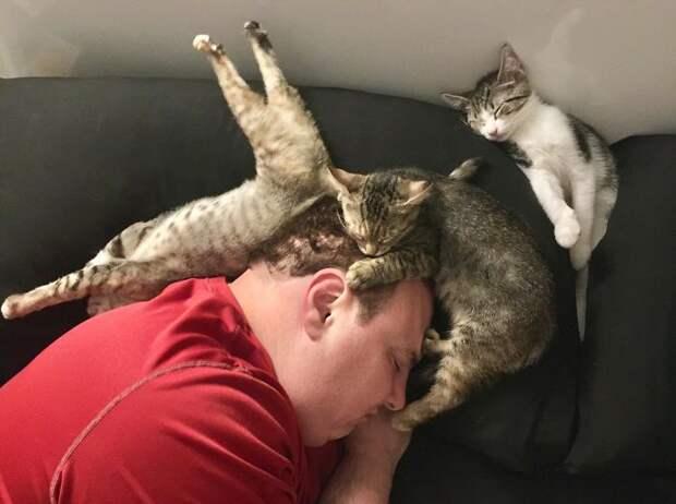Самые забавные позы, в которых спят кошки, когда их больше одной.